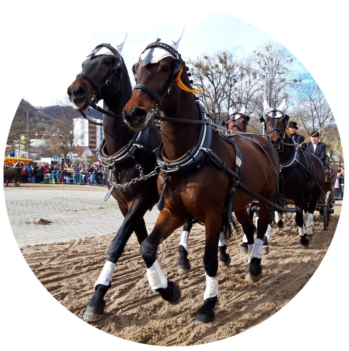 Kutschenfahrt auf dem Pferdemark