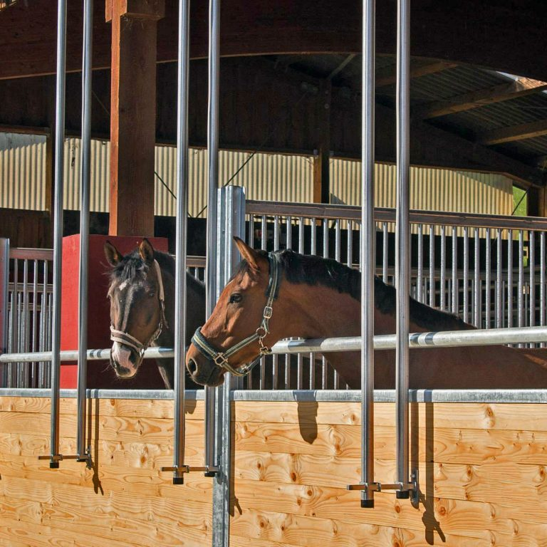 zwei Pferde in der Box 2