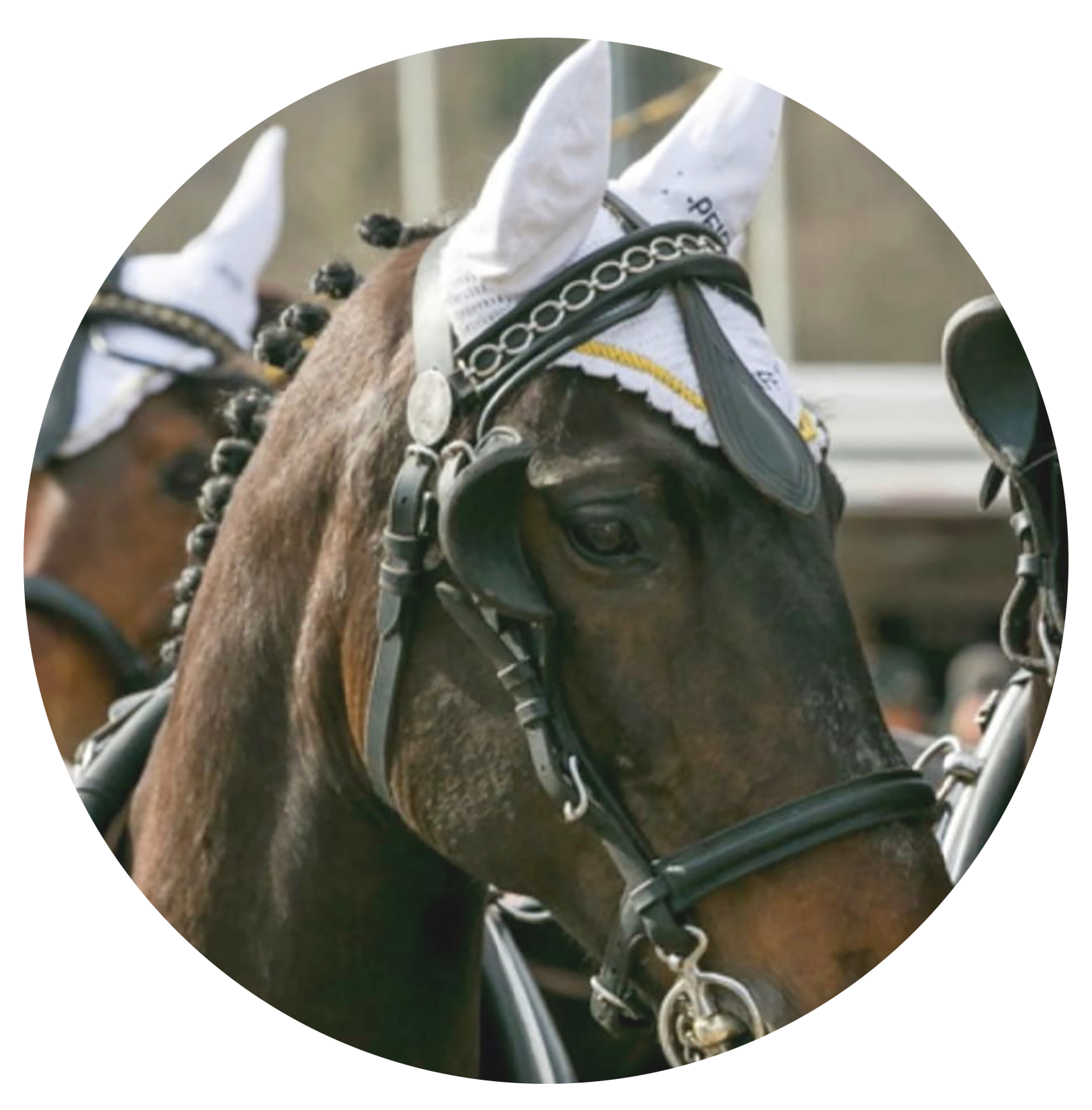 Pferdekutsche festlich_Ausschnitt
