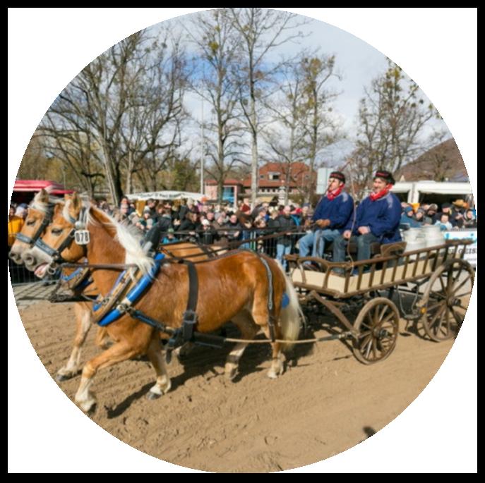 Pferdekutsche_Menschenmenge